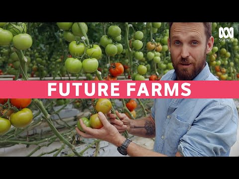 Growing Tomatoes Indoors With 94% Less Water And No Soil