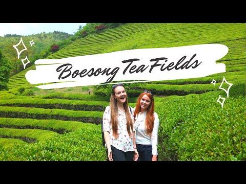 Exploring South Korea #2