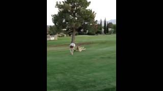 Cartwheels on the golf course Thumbnail