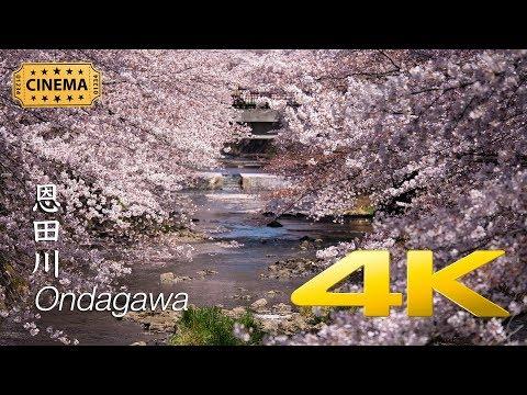 [Sakura] Ondagawa - Tokyo - 恩田川 - 4K Cinematic