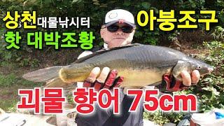 [아붕조구]전국 연속 실전낚시 (상천낚시터)조황/괴물7…