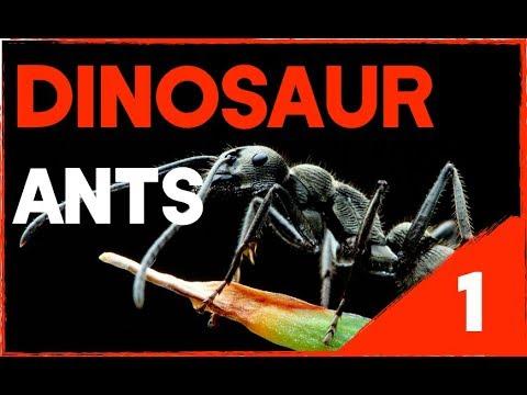 RARE DINOSAUR ANTS (Diacamma Scalpratum) FOUND IN SINGAPORE!