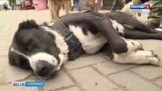 Волна жестокого обращения с животными не миновала Смоленск