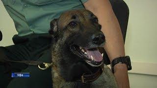 В Уфе служит собака, которая по запаху определяет количество денег, вывозимых за границу