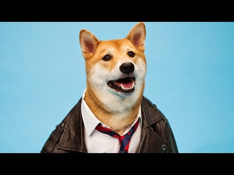 Menswear Dog's Top Fashion Trends for Pups