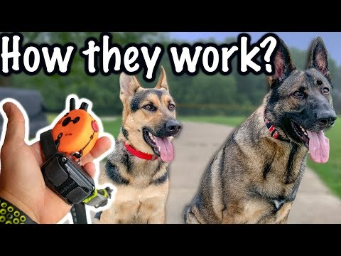 Off Leash Trained German Shepherds!
