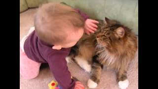 Repeat youtube video Maine Coon Compilation - Maine Coons are Cats with a Lot of Patience and Personality