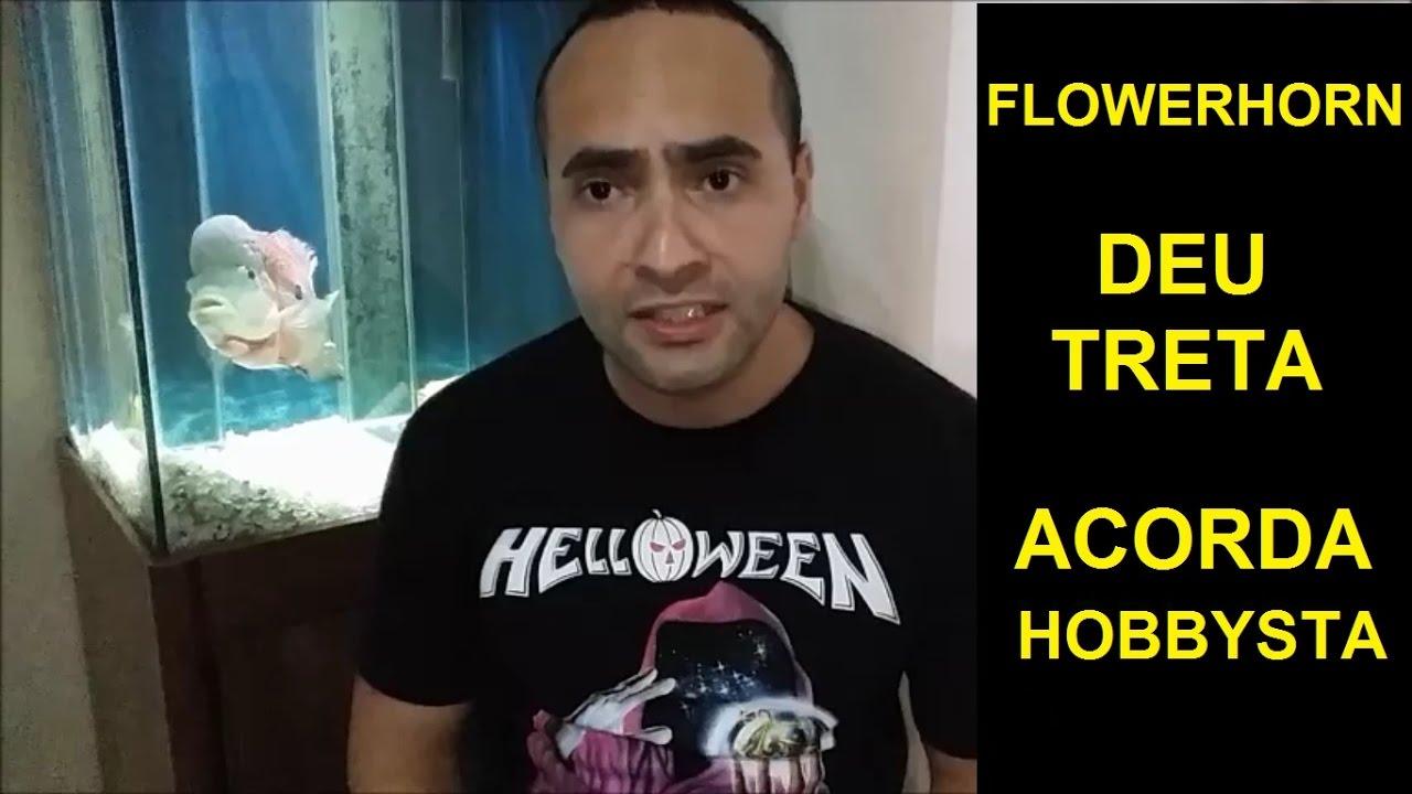 VMA AQUARISMO - Treta no Flowerhorn