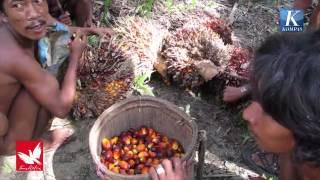 Video Menumpang Hidup di Tanah Sendiri download MP3, 3GP, MP4, WEBM, AVI, FLV Mei 2018