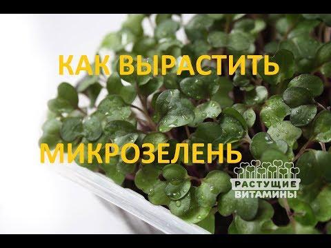 Купить семена Русский огород каталог 2016, интернет