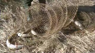 Рыбалка на щуку фитилями мережой вентерями Открытие сезона рыбалки