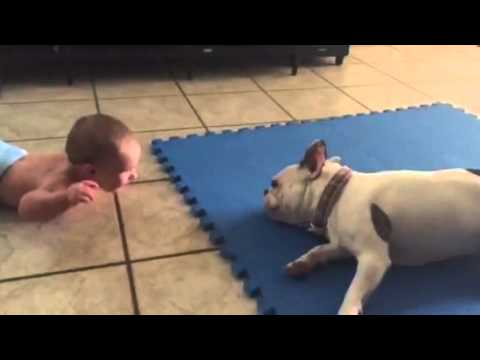Baby hilariously entertained by spinning French Bulldog