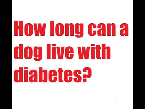 How Long Can A Dog Live With Cushing S Disease