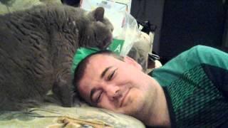 Кот лечит об облысения!