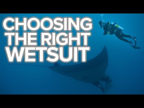 Choosing The Right Wetsuit