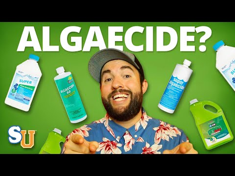 Using Algaecide In Your Pool