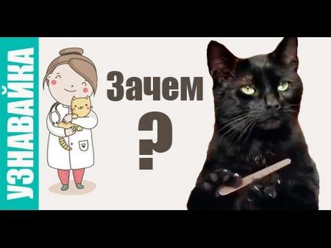Повадки и характер кошки