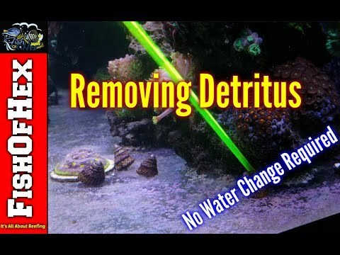 Two Methods Of Remove Detritus Without Doing A Water Change