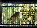 Suara Kenari Full Isian Masteran Terbaik Untuk Lovebird Murai Cucak Ijo Jernih 1 Jam Non Stop Ngobra(.mp3 .mp4) Mp3 - Mp4 Download