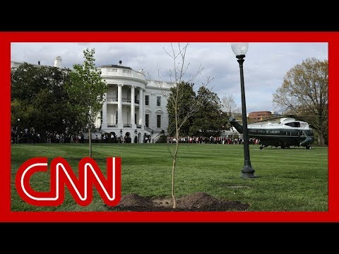 Tree symbolizing Trump-Macron friendship dies