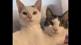 Кошки Феномены Подборка смешных котов и котят для хорошего настроения