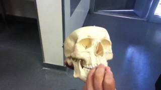Professor going over Ethmoid bone