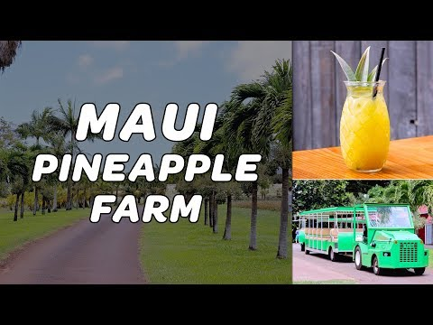 See The Maui Pineapple Farm Food Tour & Mill House Restaurant Menu At The Maui Tropical Plantation