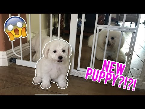 Picking Up My New Puppy!