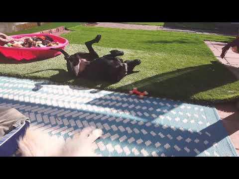 Future's so Bright: Rescue Pup Happy Ending
