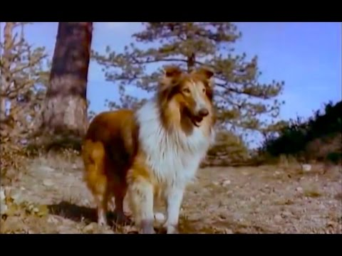 The Painted Hills LASSIE western movie full length COLOR with special interview