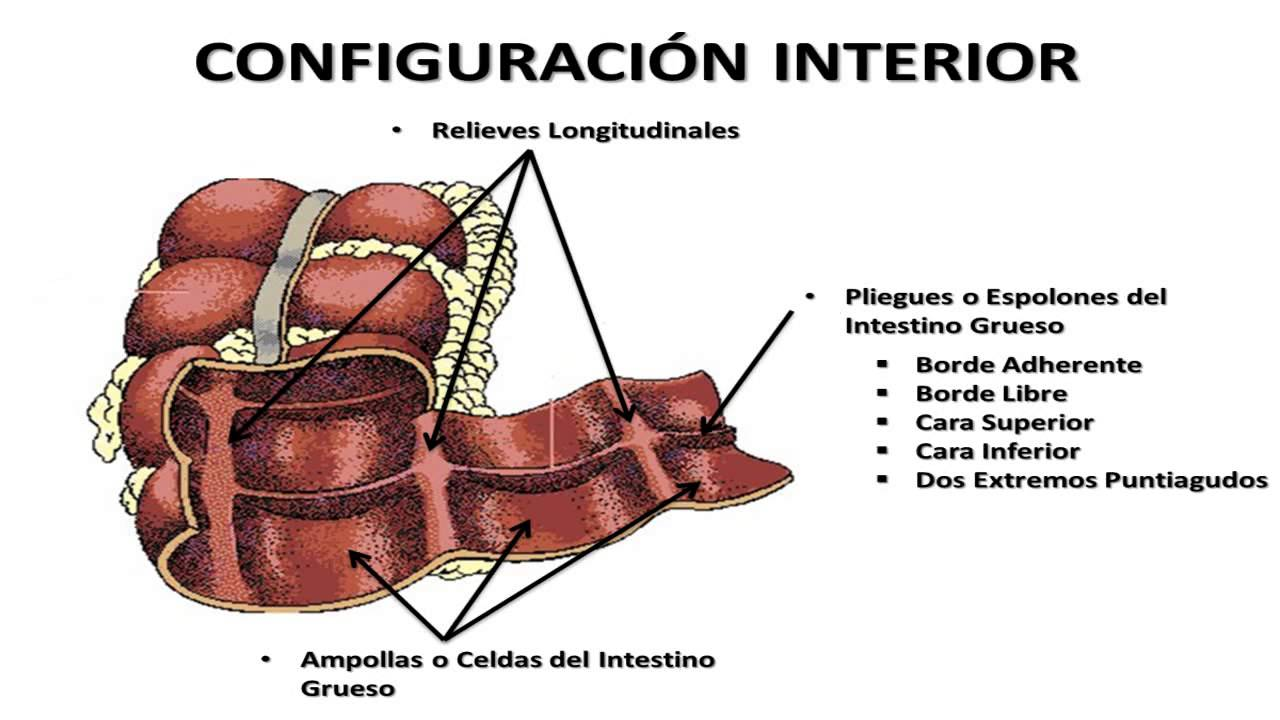 Generalidades del Intestino Grueso - YouTube