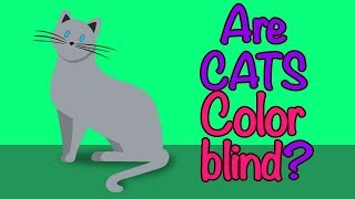 🐱 ARE CATS COLOR BLIND❓CAN CATS SEE COLORS❓