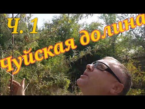 Дикая конопля в Чуйской долине. Велотур Сортобе - Шымкент. 550 км. Часть 1.