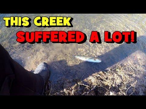 Fishing A Creek That SUFFERED A MAJOR FISHKILL! (2020 Roanoke Trip - EP 3/3)