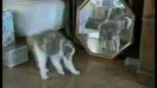 Gatos em Apuros - videos engraçados