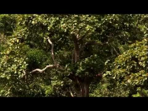 (32) Ushuaia Nature - Retour vers la planete des singes (Afrique équatoriale)