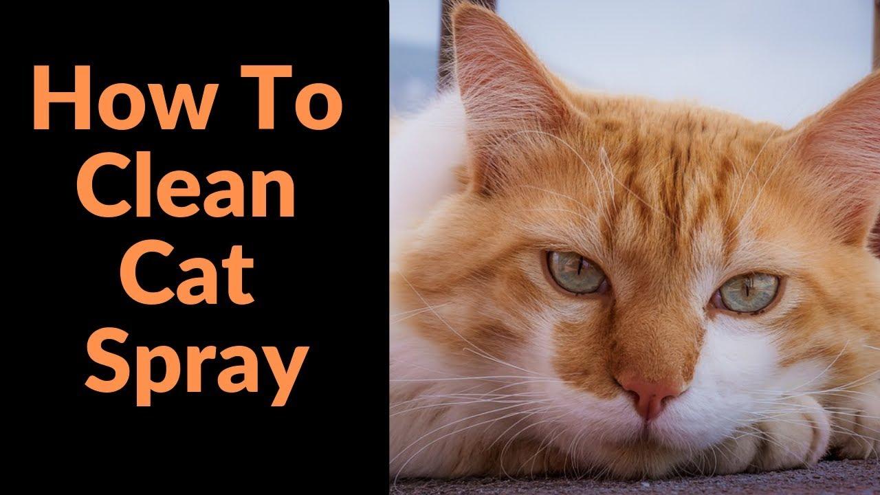 How Doh You Take a shower Home cat Spray