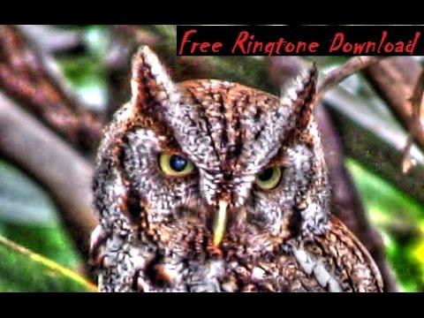 Free Haunting Screech Owl Call Ringtone !