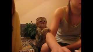 Кот, который не даст о себе забыть