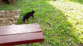 Кот бежит замедленная съемка