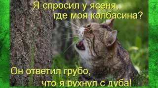 Кошка прикол, смешные фото.