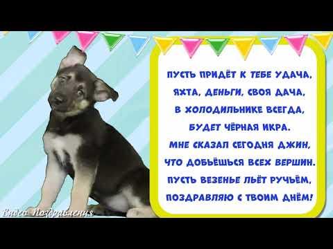 Прикольное поздравление с днём рождения. Видео открытка.