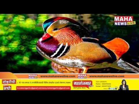 जगातील  सर्वात १० सुंदर व रंगबेरंगी पक्षी....