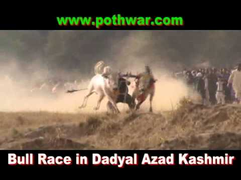 Bull Race Dadyal Azad Kashmir 22 Feb 2012