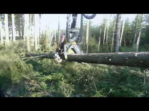 The amazing spruce