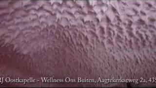 Ons Buiten Wellness