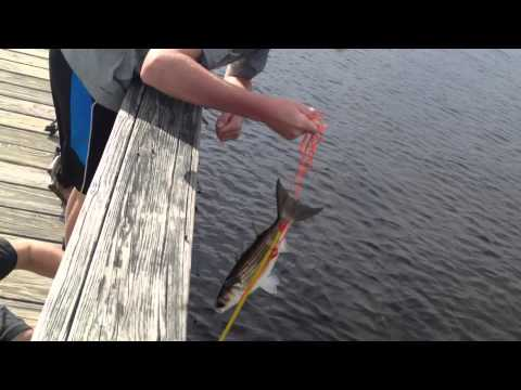 Crossbow Fishing For Mullet