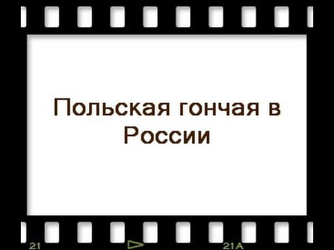 Охота с русскими гончими (видео)