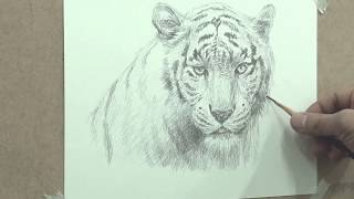 How to draw a white tiger with only one pencil/drawing Y