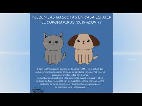 ¿Las Mascotas Son Portadoras Del Coronavirus?